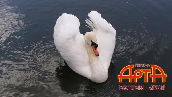 http://www.arta.org.ua/media/k2/items/cache/eefd4fe8f589e64e0e66a4f2937ae4ae_XS.jpg